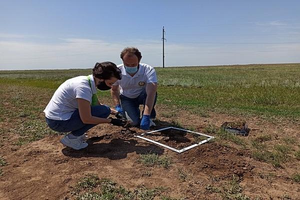 В Волгоградской области готовы к обработке территорий от саранчи