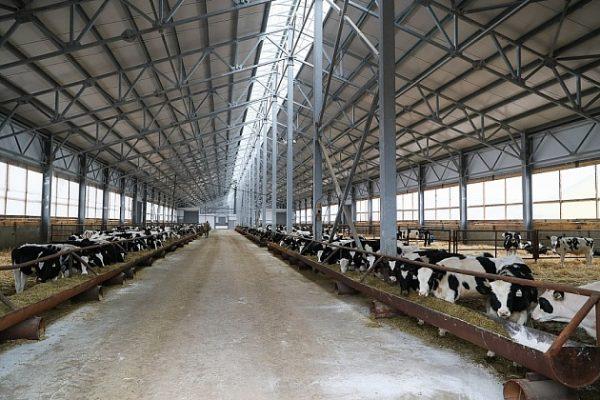 В Волгоградской области растёт производство молока