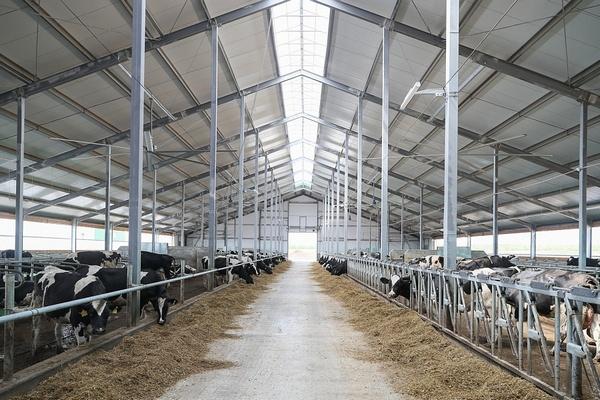 В регионе активными темпами возводится высокотехнологичный молочный комплекс