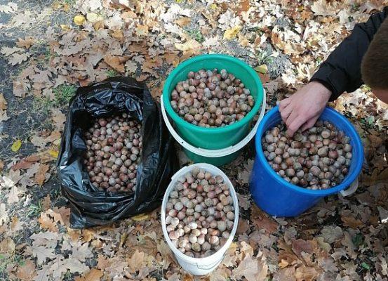 В волгоградском регионе ведут подготовку к будущим работам по лесовосстановлению